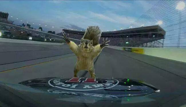Harvick's Pet Squirrel